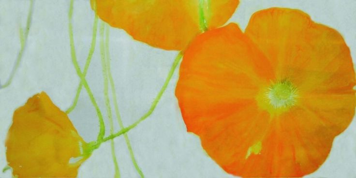 Poppies. Watercolor