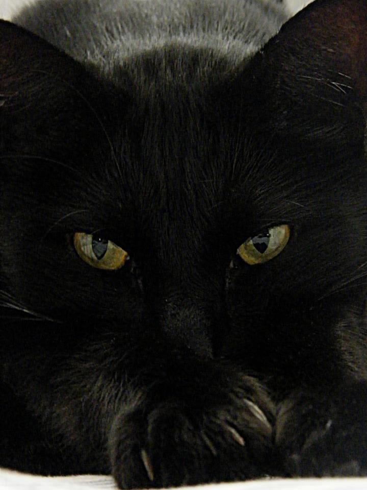 Black cat♥