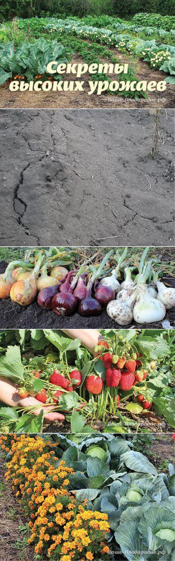 Секреты высоких урожаев — Ваше Плодородие | сад. огород | Постила