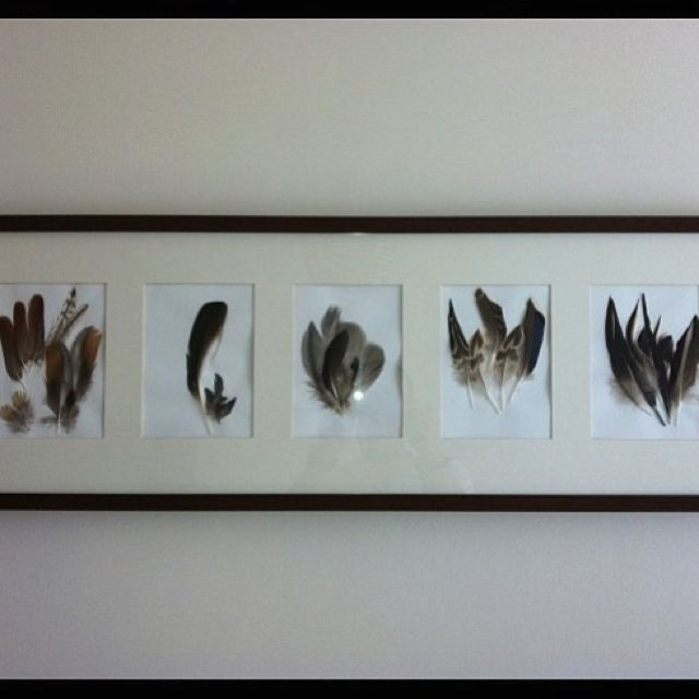 Framed feathers for hunting room