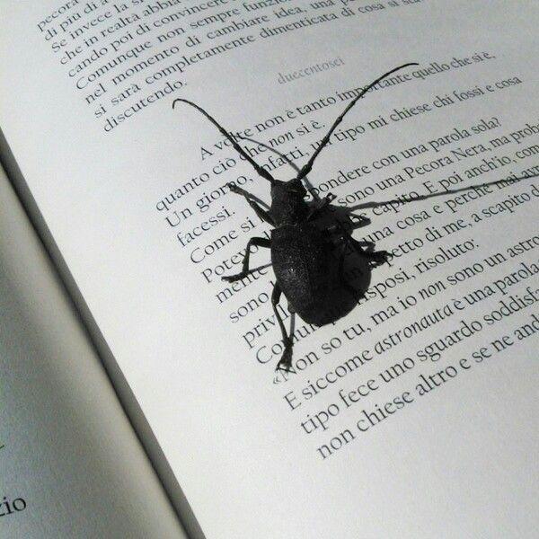 ogni #pagina è una piccola #metamorfosi #libri #kafka
