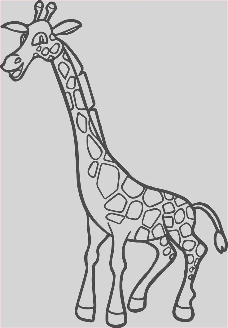 Happy Zoo Coloring Pages Photos