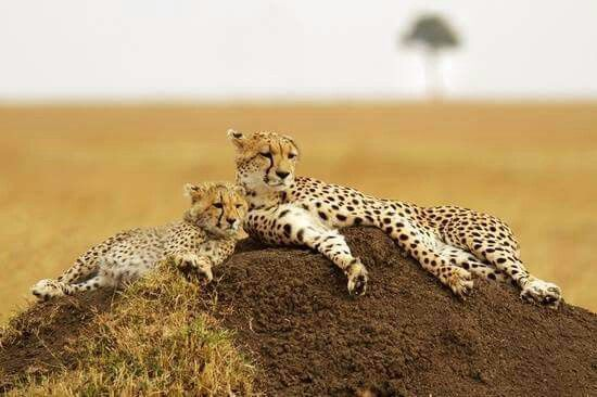 Lazy day in Africa