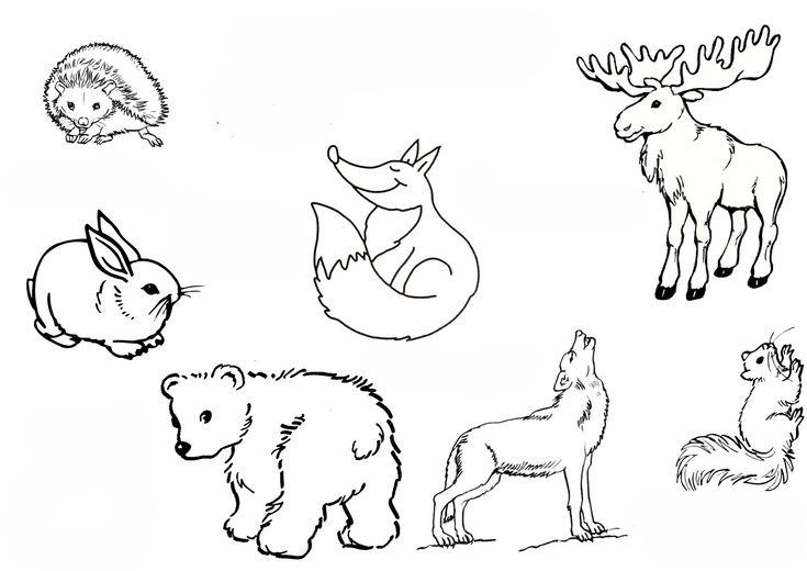 ausmalbilder waldtiere 03 | waldtiere, ausmalbilder tiere