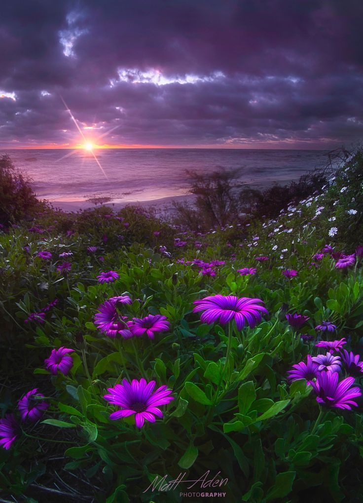 www.warriorsproject.it #citazioni #aforisma #frasi #coaching #parole #frasi #aforismi #citazioni #massime #pensieri #tempo ~~San Diego Springtime | purple daisies hillside, purple sunset, La Jolla, California | by Matt Aden~~