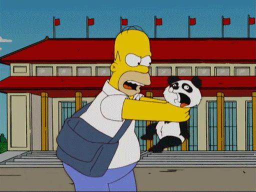 Giant Panda Information Funny Giff #4331 - Funny Panda Giffs  Funny Giffs  Panda Giffs