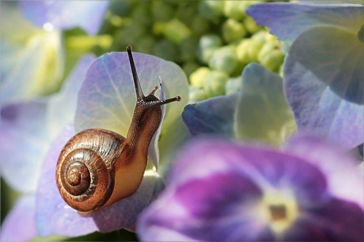 Ślimak w ogrodzie Oldiefan Pixabay