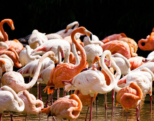 a group of flamingos is called flamboyance...40 Pleasantly Surprising Animal Facts Guaranteed To Make You Smile