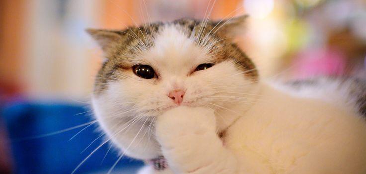 Une crème de jour hors de prix à base... d'excréments de chats