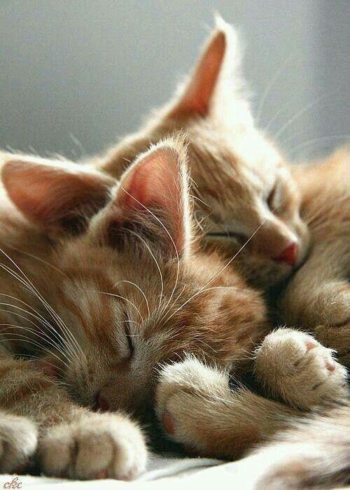 Love Cats Love Animals #katzen #bilder