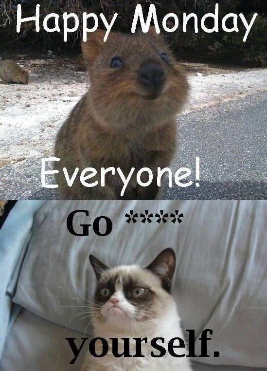 17 Best images about Quokka on Pinterest   Jokes, Happy ...