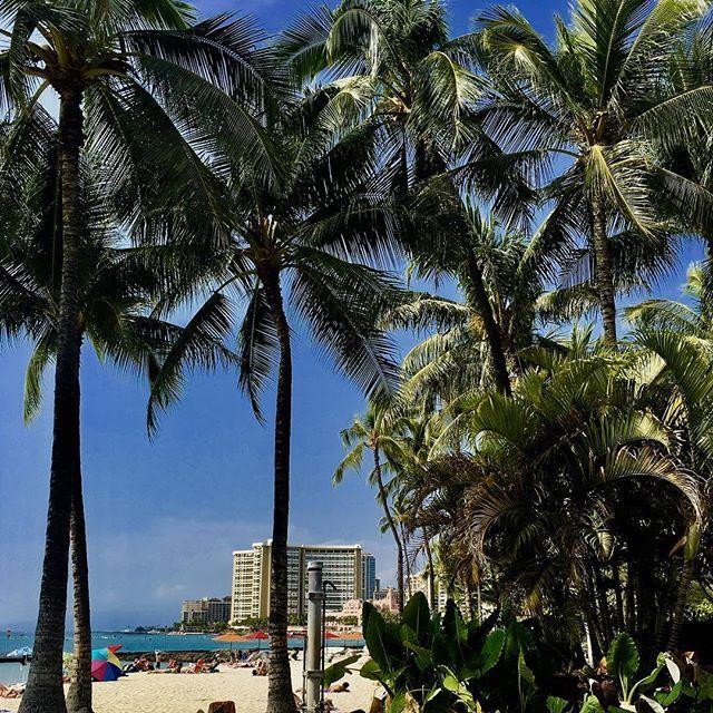It's all about the palm trees and beaches! 🌴🏝. #Oahu #paradise #beachlife #palmtrees #honolulu  #waikikibeach #bestvacations #tropical #hawaii #scenery #relaxation #naturesbeauty #naturephotography #instagood #instagram #travelgram #nikon_photography #bestdestinations #pictureoftheday by kellieschoon63. nikon_photography #bestdestinations #pictureoftheday #relaxation #tropical #naturesbeauty #travelgram #oahu #instagram #paradise #bestvacations #honolulu #scenery #waikikibeach #hawaii…