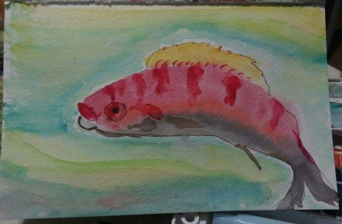 Watercolour #fish #colour