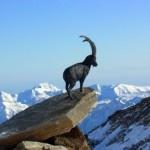 AUGURI AL PARCO DEL GRAN PARADISO PER I SUOI 90 ANNI #italian #alps #aostavalley #nationalparkgranparadiso #granparadiso #nationalpark #travel #holiday