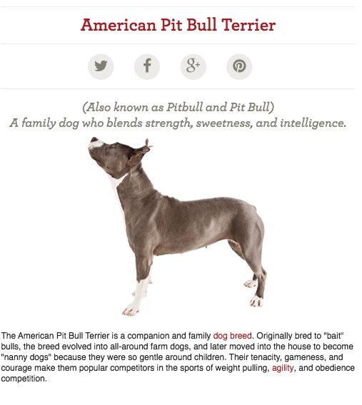 Pitbull Facts and Personality