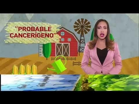 ULTIMA NOTICIAS DE SALUD. MAIZ TRANSGENICO   PUEDE PRODUCIR CANCER