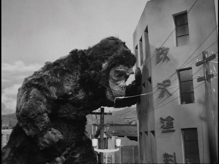 A Close up Look at the ''Refurbished'' Toho KONG Suit from KING KONG VS. GODZILLA [1962] Later used for GORO on ULTRA Q [1966] Japan.