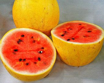 Oro de Midget de sandía, 15 semillas orgánicas, carne rosa dulce, corteza amarillo, madura temprano, reliquia natural, fruta vistosa, mercado de agricultores