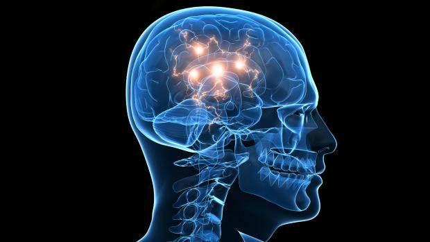 Neurocientista explica por que pesquisadores se uniram para assinar manifesto que admite a existência da consciência em todos os mamíferos,…
