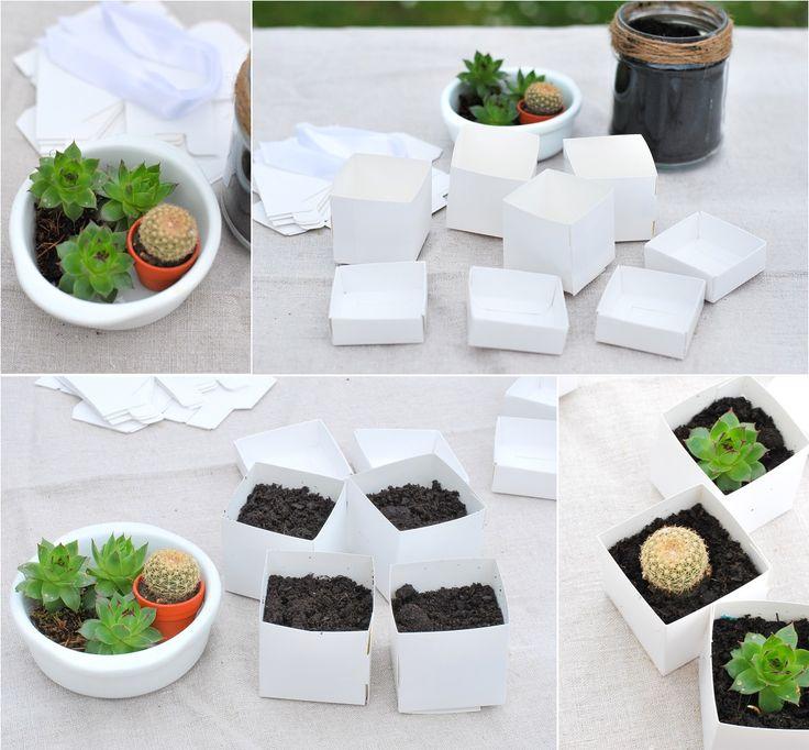 cadeau original et pas cher pour vos invit s mariage des succulentes mariage originals and. Black Bedroom Furniture Sets. Home Design Ideas