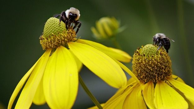 Gloucester becomes bee friendly | West Country (E) - ITV News