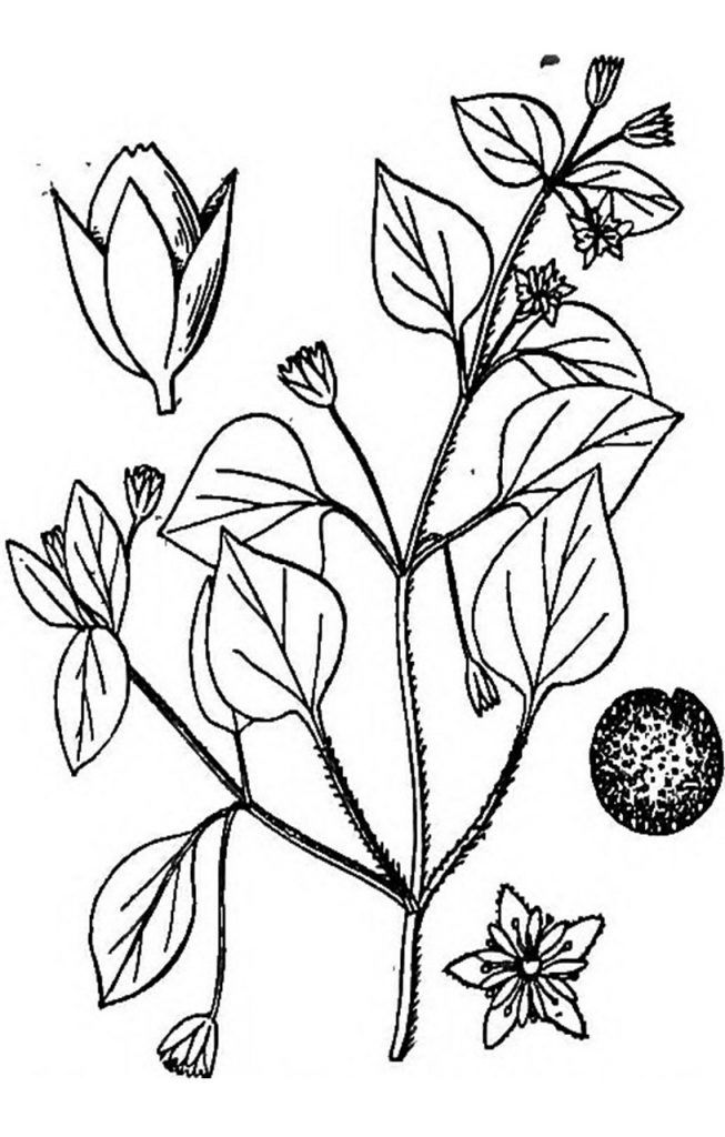 Pin On Flower And Plants Coloring Pages