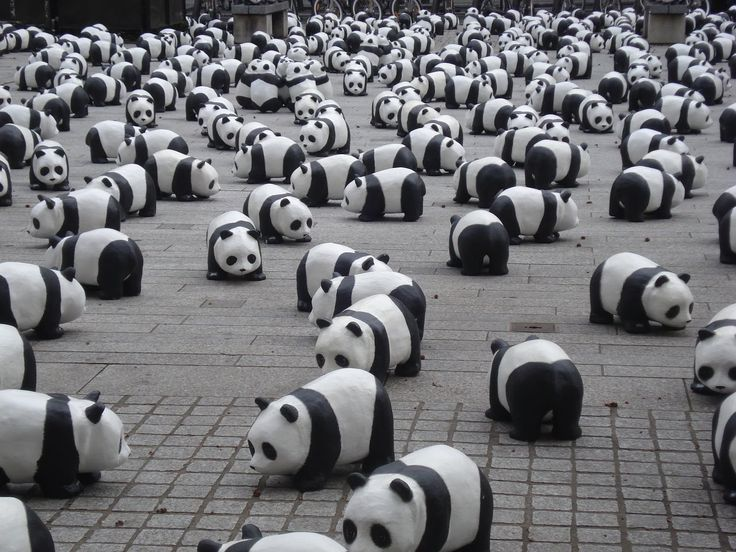 Best 15 Cute Panda Videos Doing Funny Things Compilation