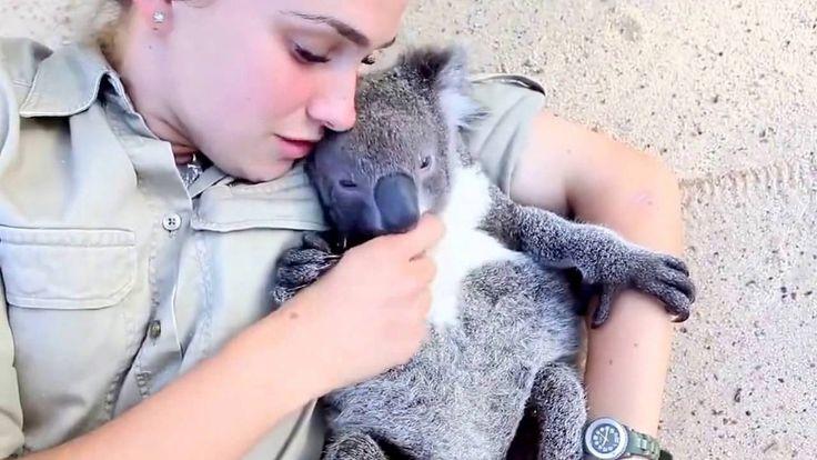 Очень милый #медвежонок коала !  Very cute #bear Koala !