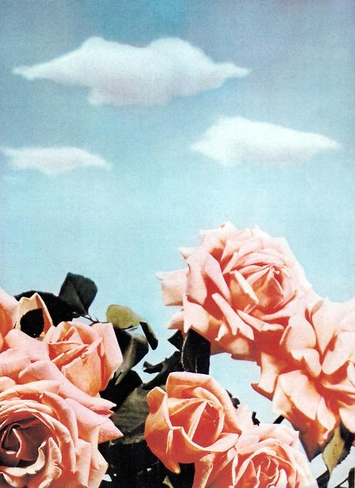 Roses - Paul Outerbridge