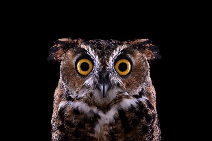 """Impresionante retrato captado por Brad Wilson en su serie de fotos """"Affinity"""", con animales salvajes retratados en estudio. Estos días se expone en Londres.  http://bradwilson.com/"""