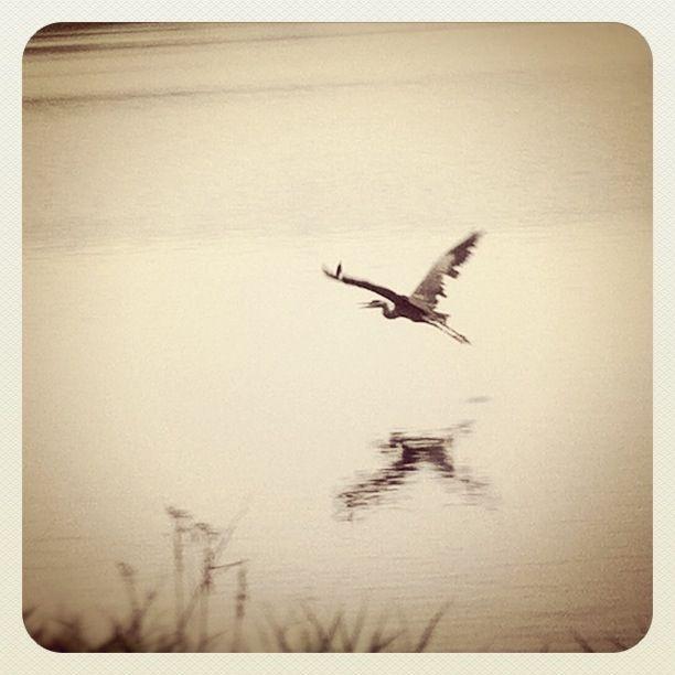 Heron Lake by intao