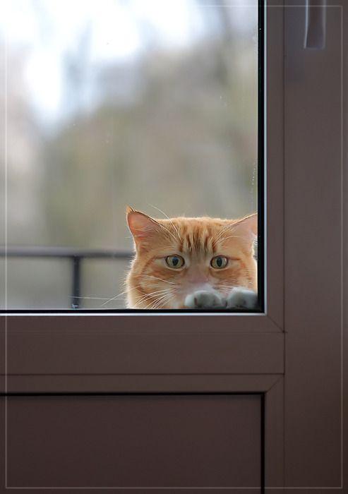 <3: The Doors, Kitty Cats, Cat Window, Animals, I Promise, Cute Cats, Pet, Kitty Kitty, Kitties