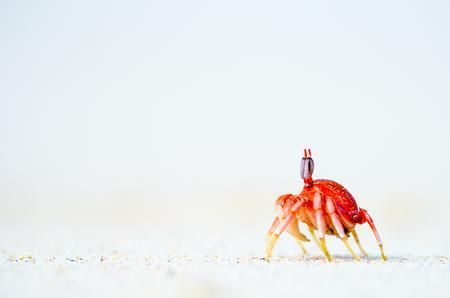 THE BAYWATCH Photo by Enrique del Campo — National Geographic Your Shot