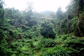 Posee un clima tropical seco con alternancia de estaciones secas con lluviosas. Según Antonio Brack Egg constituye una de la ecorregiones del Perú, tal como lo reconoce desde 1987 el Instituto Geográfico Nacional del Perú.