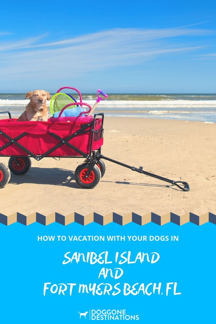 Sanibel Island And Fort Myers Beach Dog Friendly Attractions That