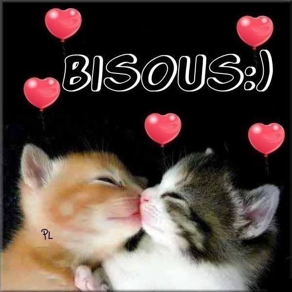 Bisous :) #bisous chats chaton bisous mignon                                                                                                                                                                                 Plus