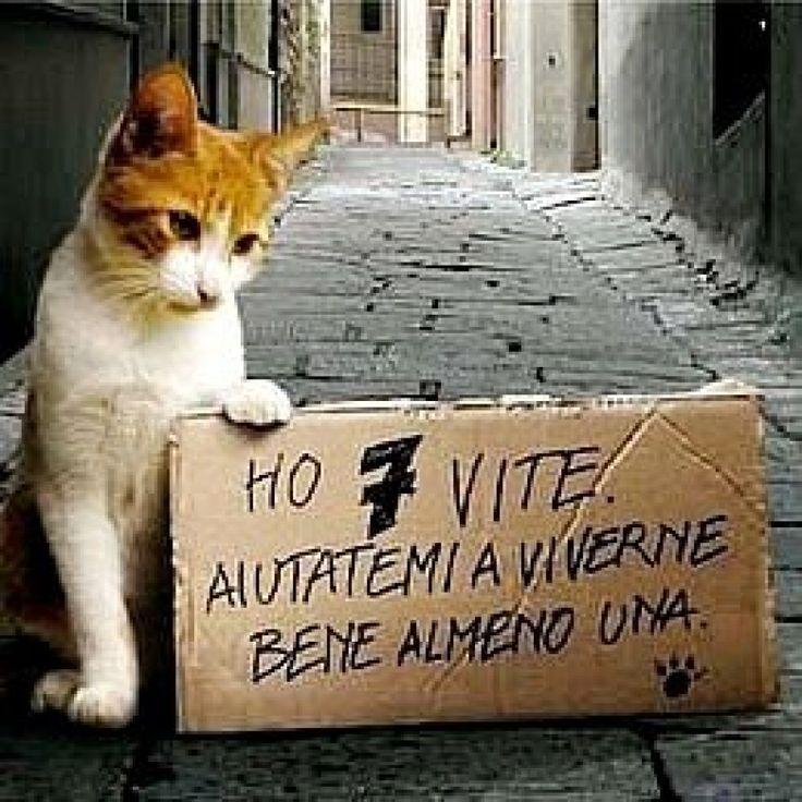 A Messina cani randagi, gatti vaganti e cinghiali vagabondi .