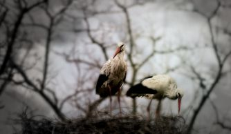 I'm Waiting For Her She said: 'I shall return.' It is like a proud stork. She is my flyaway swallow. It is a return ticket for my colorless life. I'm waiting for her. poem b…