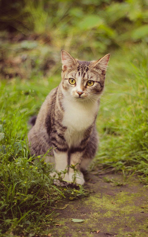 photogenic felines - (Sergey Chernov)