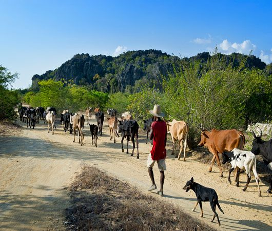 Madagascar, à la découverte du Sud...