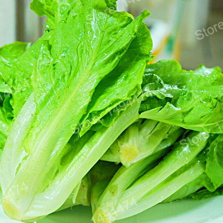 >> Click to Buy << 100pcs/bag Lettuce Seeds vegetable seeds bonsai seeds good taste,easy to grow,great salad choice,DIY Home garden seeds vegetable #Affiliate