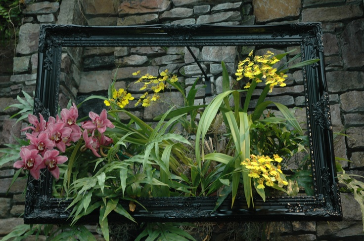 Orchids are displayed as a work of art in Daniel Stowe Botanical Garden's Orchid Conservatory.