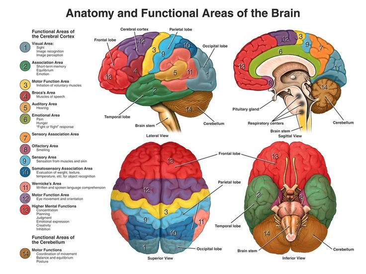 This picture shows the brain from four different views using color-coding to show the anatomy and functional areas. Color-code keys depict functional areas for vision, association, motor function, Broca's speech, hearing, emotions, sensation, smell, written language, cognition and base motor functions like balance, equilibrium and posture.