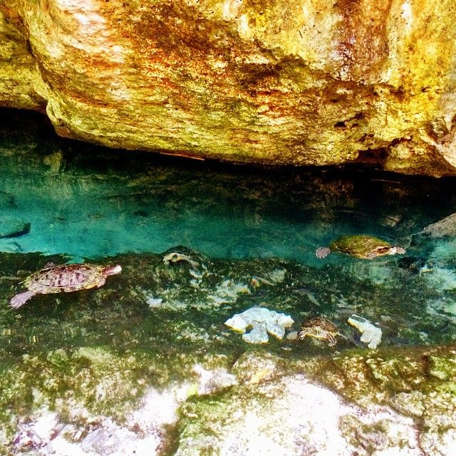 Swimming with turtles :)