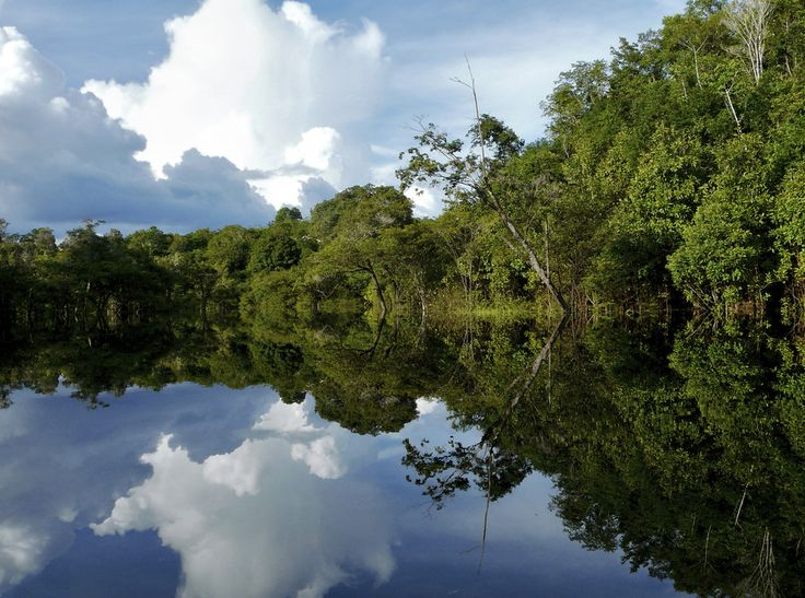 Amazon forest, border with Brazil, Peru, Colombia, Venezuela, Ecuador, and Bolivia
