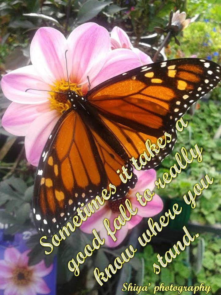 https://flic.kr/p/FZ1YXX | butterfly