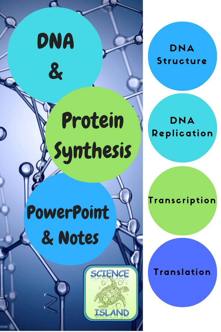 Biology PowerPoint and Notes: Over 75 slides and 3 versions of student notes cover DNA structure & replication, transcription, translation and mutations.