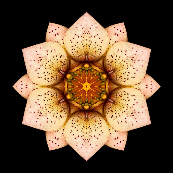 ... from David Bookbinder's Flower Mandala Project
