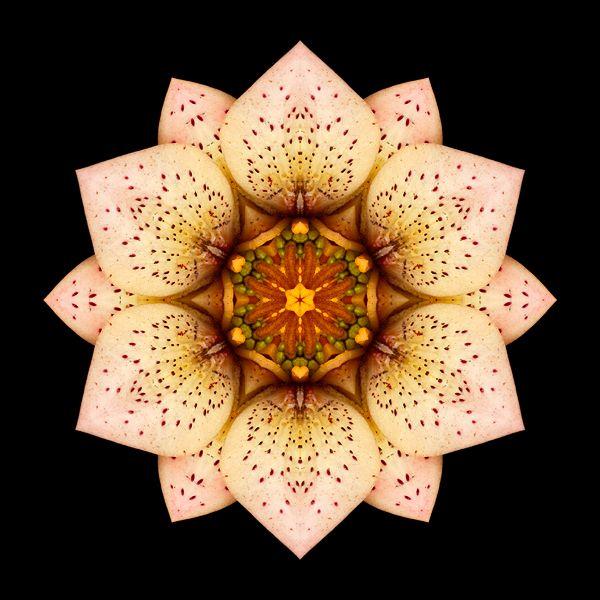 ... from David Bookbinder's Flower Mandala Project