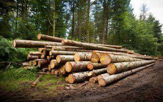 La filière bois signe sa première charte de contractualisation
